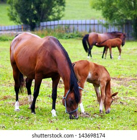 Horses grazing and taking rest on the green field.