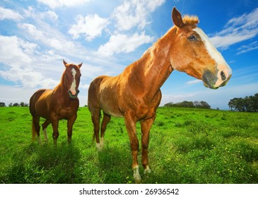 Horses in Green Field with Sunny Blue Sky