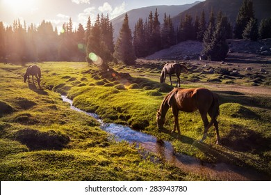 Horses in the Gregory gorge mountains of Kyrgyzstan, Central Asia