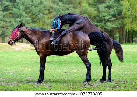 Horse having sex Nude Photos 79
