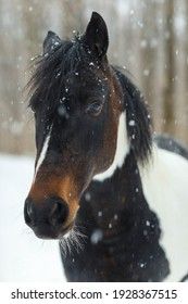 a horse's head taken in a snowfall in early March in a park