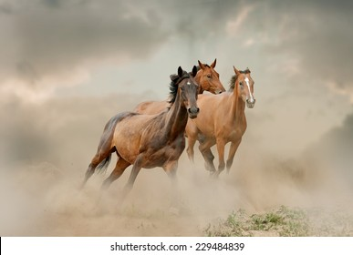 horses herd in dust