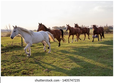 Horses in a herd at sunset