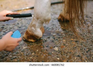 Horse's hoof, close up