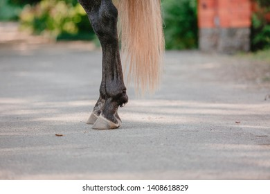 The horse's hooves. The legs and tail of a horse