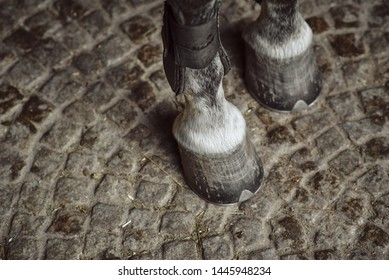 Horse's hooves with protectors on the sidewalk