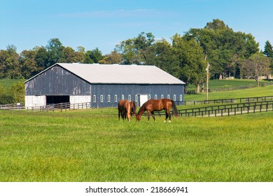 Horses at horse farm. Country landscape. selective focus
