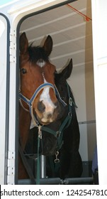 Horses and horseboxes, travel