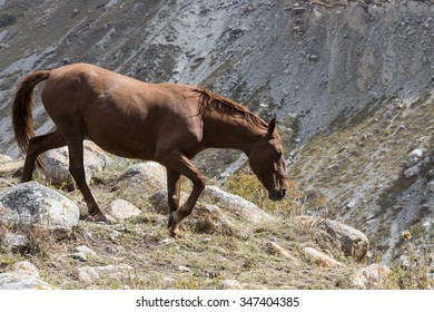 Horses in Kyrgyzstan mountain landscape at landscape of Ala-Archa gorge.