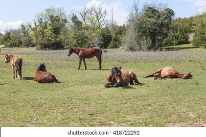horses laying down
