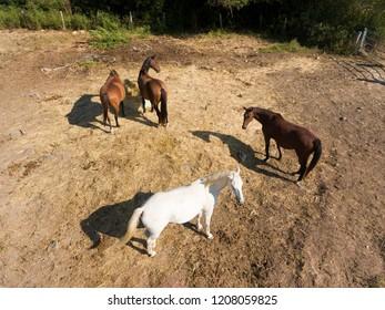 Horses, Le Val-Saint-Germain, Essonne, Ile-de-france, France