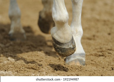 Horse's legs close up