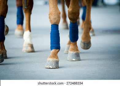horses legs closeup walking