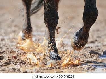 Horse's legs in the dirty water closeup
