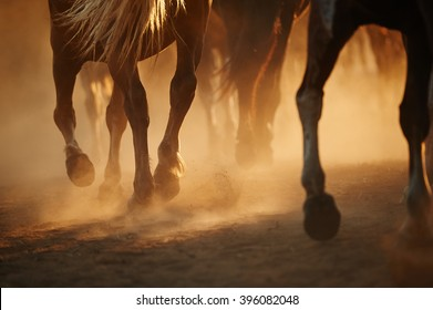 Horse's legs in the dust
