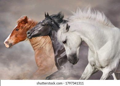 Horses with long mane portrait run gallop in desert dust