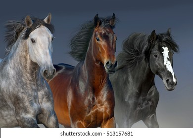 Horses with long mane portrait run gallop