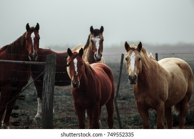 Horses looking you
