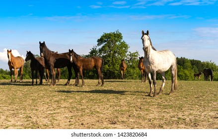 Horses. It looks like the wild west. Howdy cowboy.