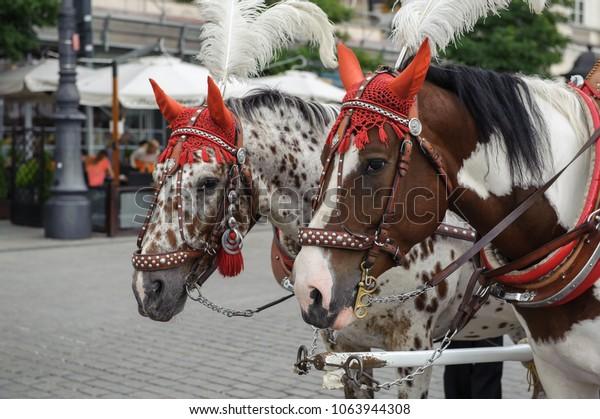 Horses at the Main Square, Krakow
