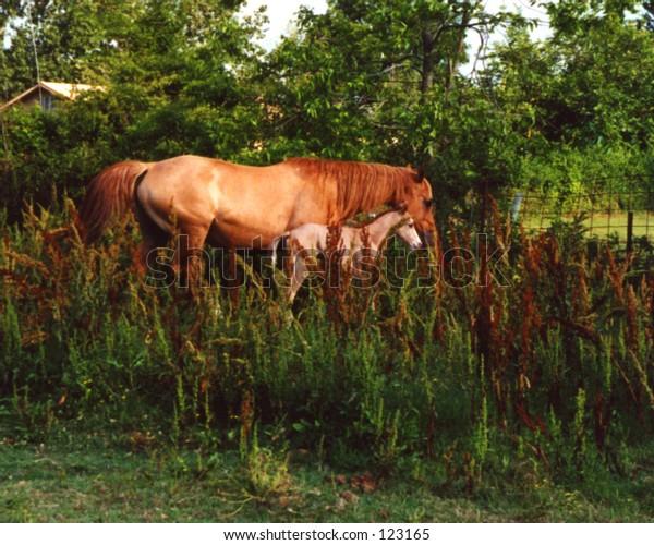 Horses:  Mama and Baby