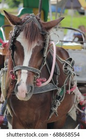 Horses are mammals. Used in sporting events and tugboat-based species like outdoor living.