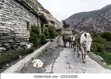 Horses in Marpha village, Nepal