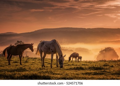 Horses in the mist while browsing at sunset.