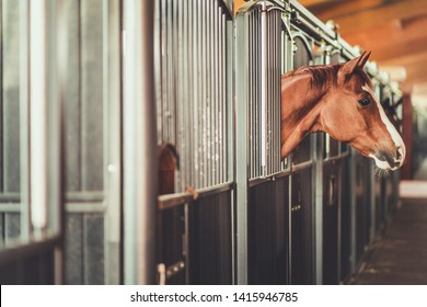 Horses in a Modern Stable Awaiting His Owner in a Box. Equestrian Facility