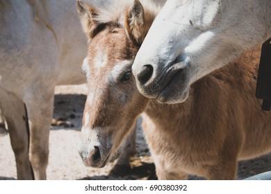 Horses, Mom, Father & children