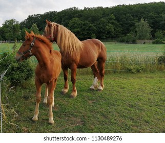 Horses - mom and foal