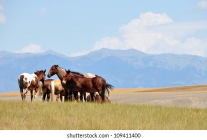 Horses - Montana