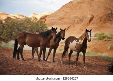 Horses in the Monument Valley, arizona, USA