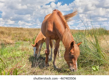 horses mother and baby grazing