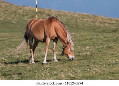 Horses in mountain pasture, Balkan mountain, Bulgaria