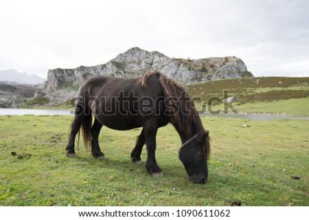 horses in a natural park