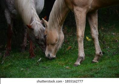 horses nature outdoors caballo naturaleza