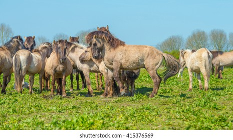 Horses in nature in spring