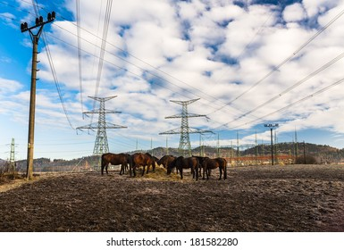 Horses near Electric Power Distribution facility