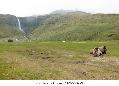 Horses near Grundarfoss, one of the largest waterfalls on the Snæfellsnes Peninsula in western Iceland.