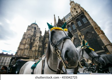 Horses near the St. Stephen's Cathedral in Vienna