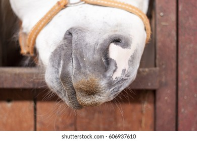 the horse's nose close up