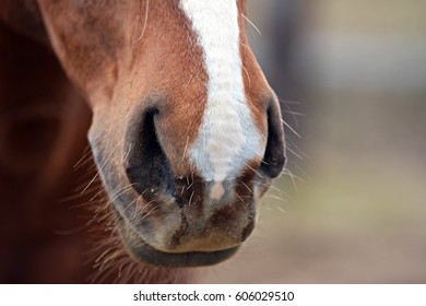 Horse's nostrils
