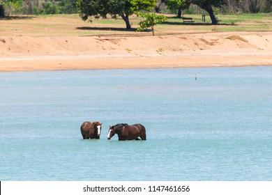 Horses in the ocean at Gununa, Mornington Island, Queensland, Australia
