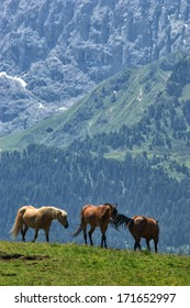 Horses on Alpe di Siusi (Seiser Alm) in Dolomites, Italy