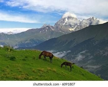 Horses on alpine meadow