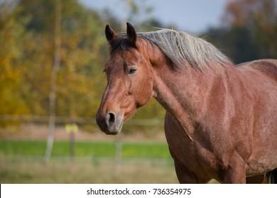 Horses on the autumn pasture,