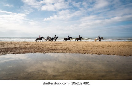 Horses on the beach in Domburg, the Netherlands, on a sunny day.