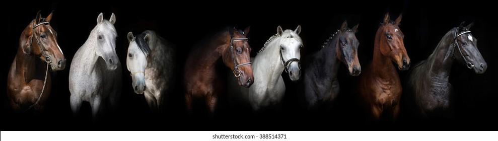 Horses on black background web banner