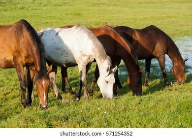 horses on the catwalk